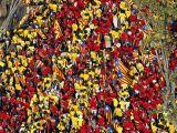 Los tanques catalanes no se paran: sonríen yavanzan